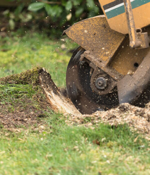 Stump Grinding Services In Melbourne